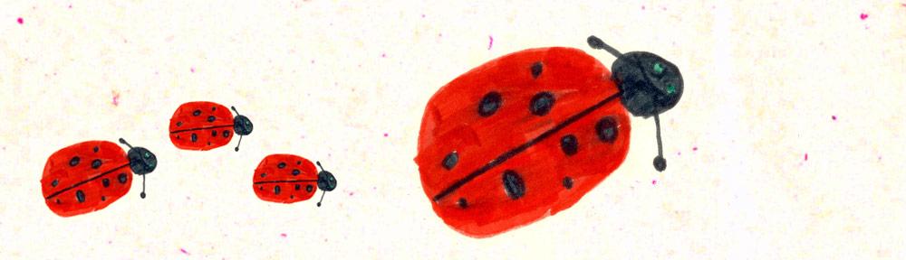 Atelier pour les élèves du 1er cycle sur les insectes